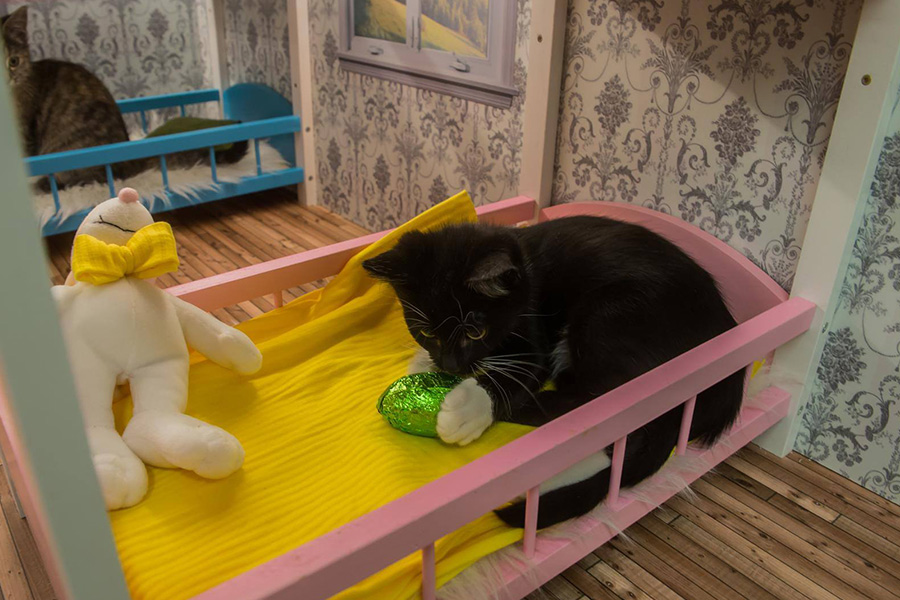 The cat shelter in Reykjavik needs your help.